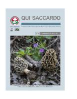 QUI SACCARDO N° 45 – Anno 22°