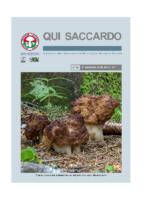 QUI SACCARDO N° 44 – Anno 21°